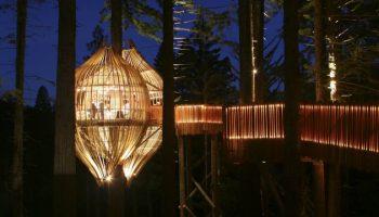Дома на деревьях (25) фото необычная архитектура