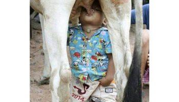 Угарный прикол имидж ничто мальчик сосёт вымя коровы