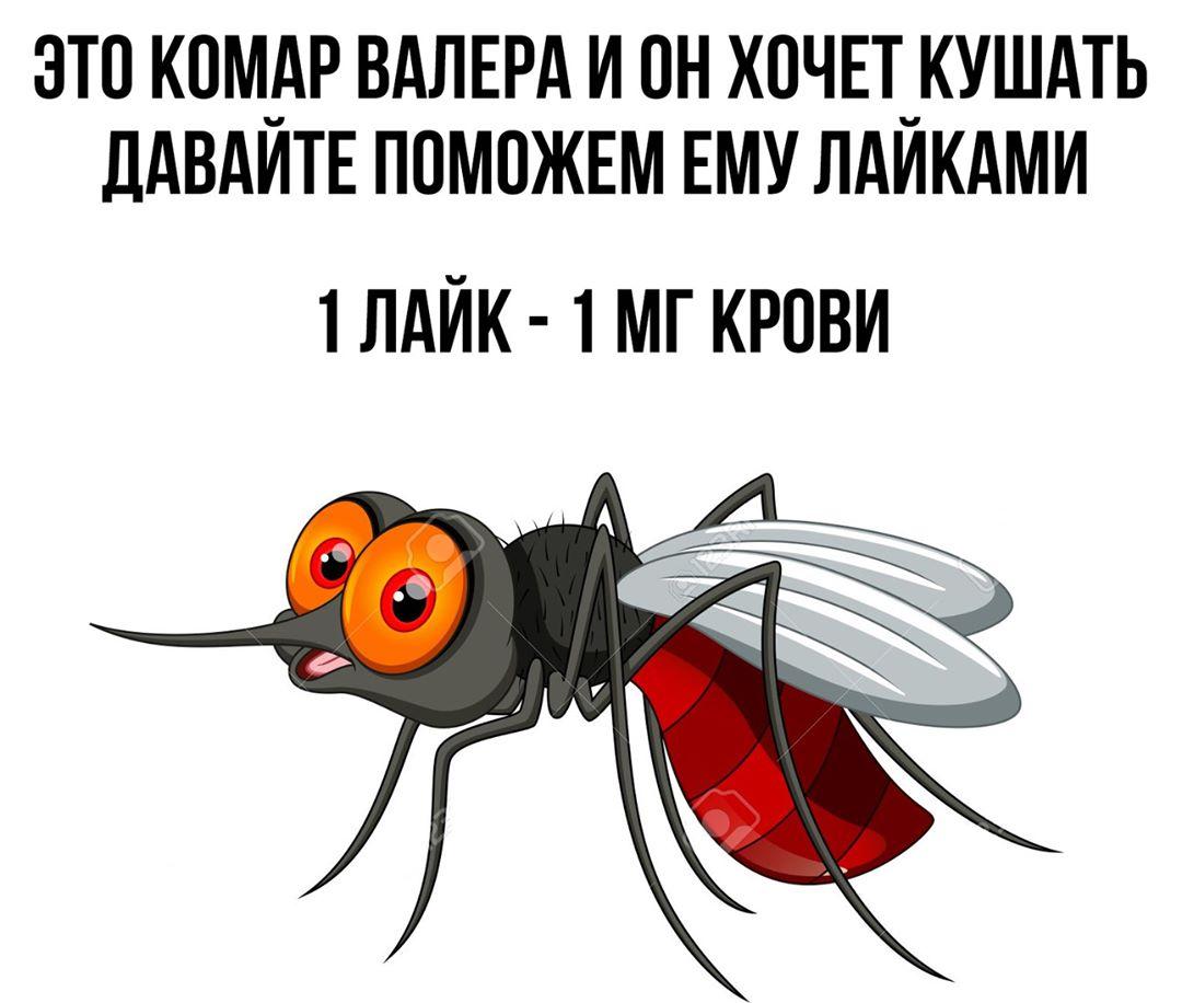 Фотоприкол комар Валера