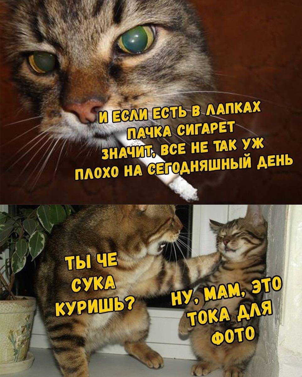 Котёнок с сигаретой в зубах когда хочешь казаться крутым