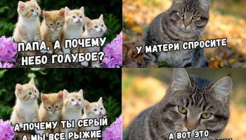 Прикол про измену кошки и кота который стал догадываться