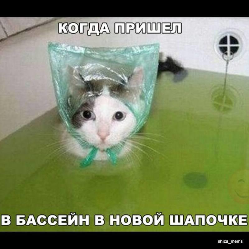Кот в ванной в шапочке из полиэтилена